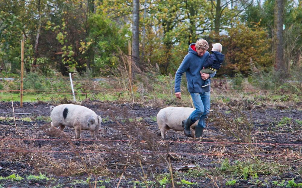 Arjen en zijn varkens